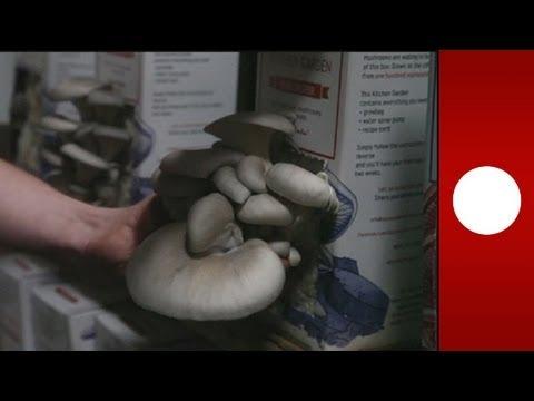 Come rapidamente uccidere un fungo su unghie di gambe
