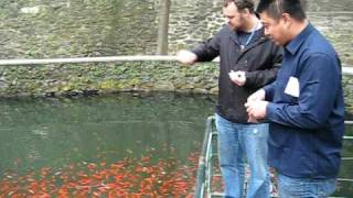 preview picture of video 'China, Dalian, Fish at Temple'