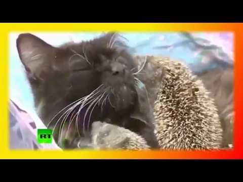 , title : 'Прикольные кошки Позитив Для детей Fanny animals Создай себе хорошее настроение'