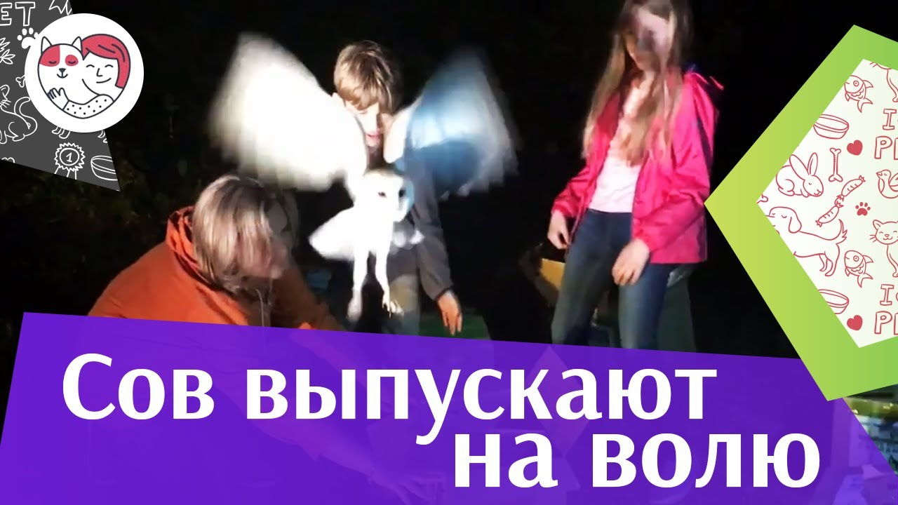 Выпуск сипух 2018 г. на ilikepet