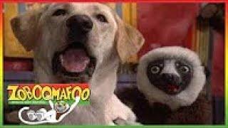 Zoboomafoo 111 - Fierce Creatures (Full Episode) Episode 1