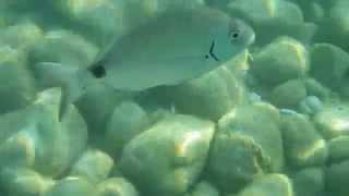 Корфу. Под водой (Corfu. Under water)