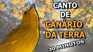 Canário Da Terra Canto Para Filhotes #PássaroseCantosOficial