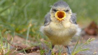 Animais que fazem sons engraçados
