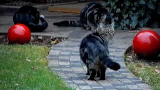 Katze Mimi – Fütterung unserer Streuner