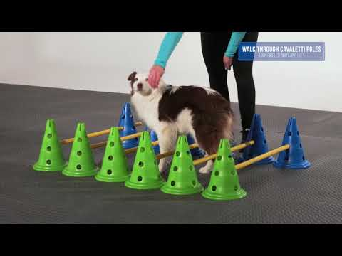 FitPAWS® CanineGym® Agility Set