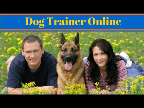 Become A Dog Trainer Online - Dog Training Careers - YouTube