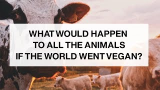 If the World Went Vegan, What Would Happen to the Animals?