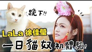 黃阿瑪的後宮生活-【LaLa徐佳瑩】進宮服侍阿瑪,貓奴初體驗!