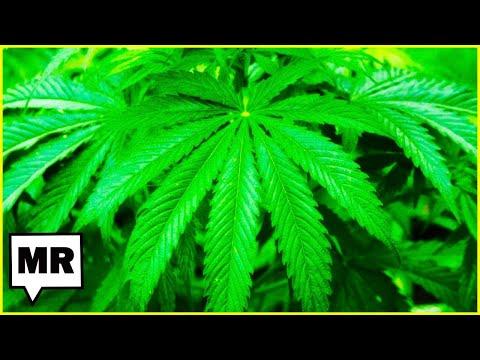 Florida's Legal Cannabis Problem