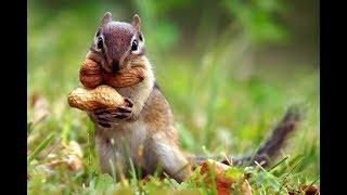 Chipmunk funny | Бурундук смешной