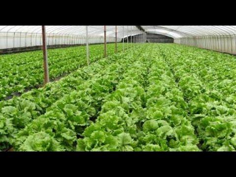 Video Tips Budidaya Sayuran Organik