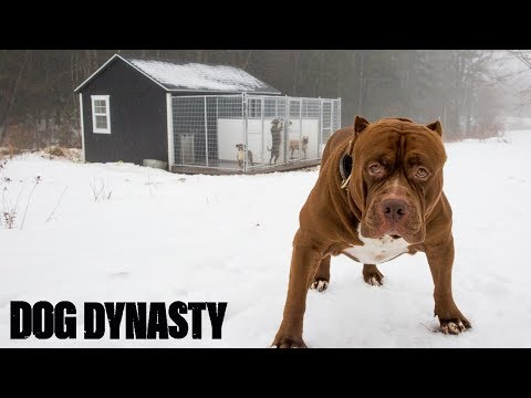 Pimp My Kennel - Hulk's New $25,000 Home | DOG DYNASTY