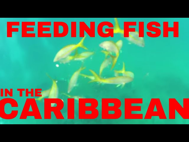 Feeding fish in the tropical Dominican Republic waters