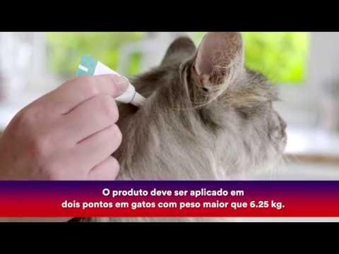 Hogyan lehet eltávolítani a szagot a szájból