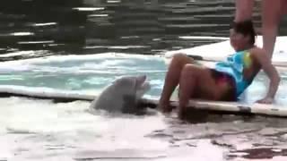 Horny Dolphin Rapes Girl