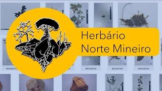 Herbário Norte Mineiro