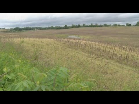 Wet spring yields dismal fall harvest