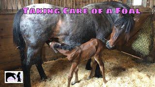 Foal Care