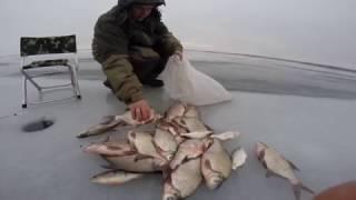 Рыбалка на маныч отчет о рыбалке