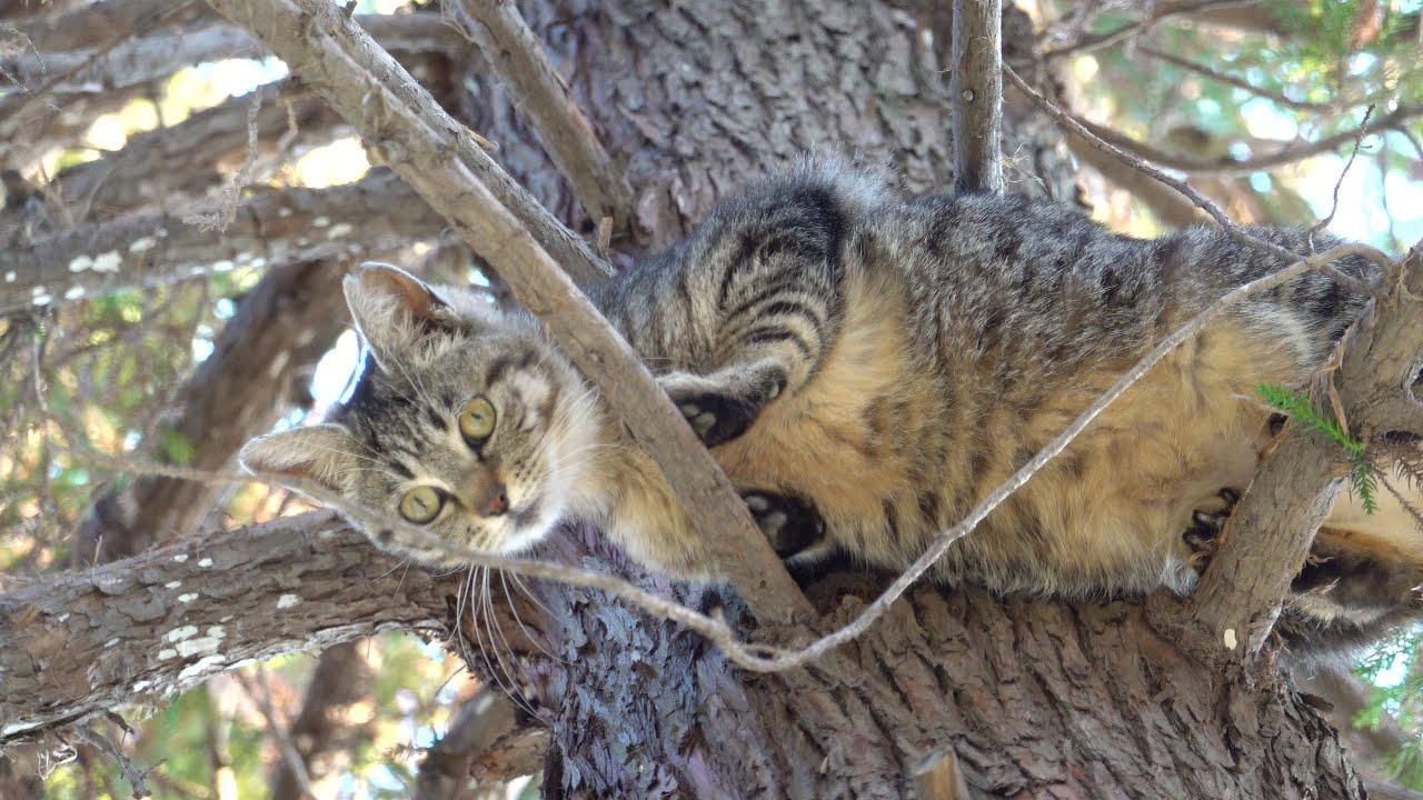 木登りが大好きなキジトラ猫、そんな高い木に登って大丈夫?