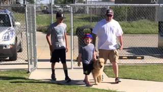 The Bond With An Autism Service Dog