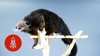 """This """"Bearcat"""