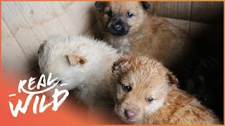 Taking Care of Abandoned Puppies | For The Love Of Dogs  | Wild Things Documentary