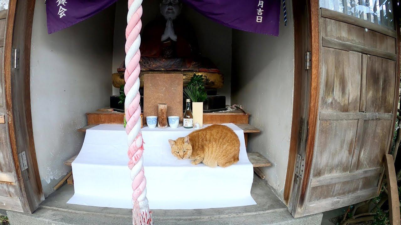 猫達が小さな神社を占領する!? #猫 #cat #野良猫 #神社 #占領
