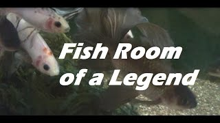 Fish Room of a Legend Mike Hellweg's Fish Room Tour