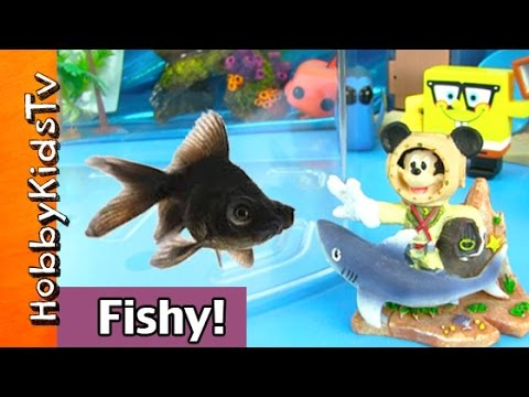 HobbyFish Gets New Fish Friend!