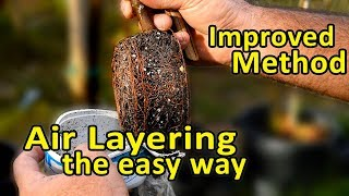 Air Layering Trees - Clone Your Fruit Trees The Easy Way.