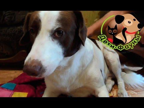 Раны у собак. Общие принципы обработки раны у собаки