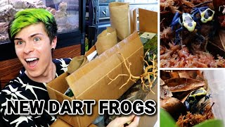 Reptile Supplies + Poison Dart Frog Unboxing!!!