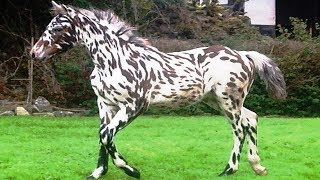World's RAREST Horse Breeds Ever! | Kholo.pk