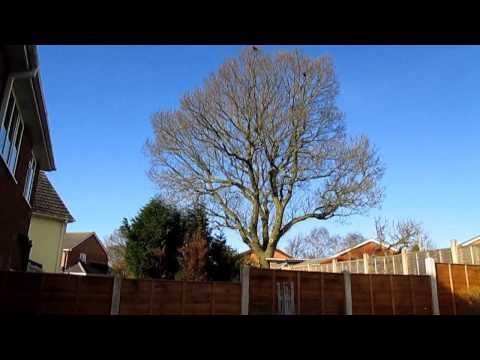 Canon IXUS 145 video and photo zoom test