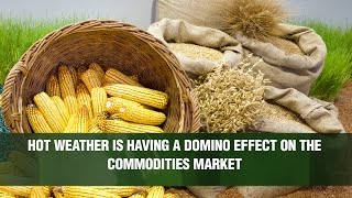 CORN - Efecto dominó: maíz y granos