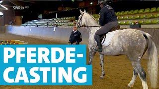 Polizei Lädt Pferde Zum Casting | Gestüt Marbach