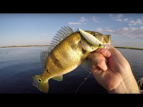 La musica da pesca per ascoltare
