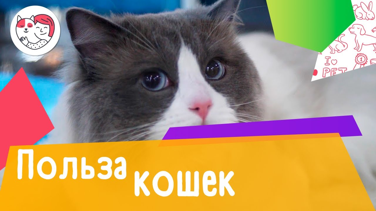 5 доказательств того, что кошки полезны для здоровья человека