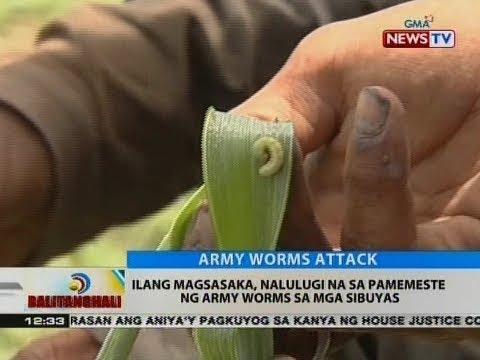 Pagpapaalis ng mga taong nabubuhay sa kalinga mula sa atay