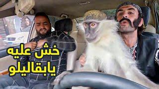 تحميل اغاني اقوي مقالب رمضان .. القرد بقاليلو ???? ومروض الحيوانات في كريزي تاكسي MP3