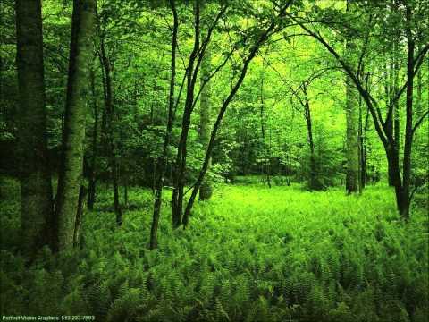 Rachmaninov: Prelude in D Major, Op. 23, No. 4