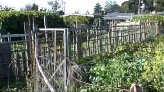 Community Gardening in Eureka, California Part 1