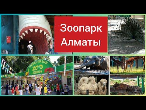 Vlog Зоопарк Алматы Май 2019 Парк Горького Почему гиббоны так громко поют?