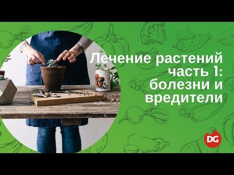 Препараты против глистов в печени