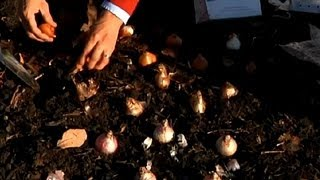 How to Plant Continuously Flowering Bulb Gardens : Fall & Winter Flowers