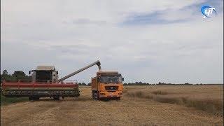 В Новгородской области появится новая мера поддержки крестьянско-фермерских хозяйств