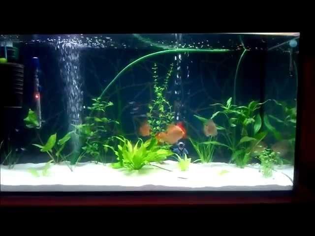 Aquarium 200l of discus fish Akwarium 200l z Paletkami Aquarium 45Galon