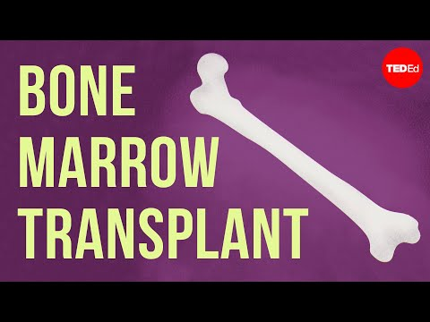 סרטון הסבר: כך העצמות שלנו מייצרות דם